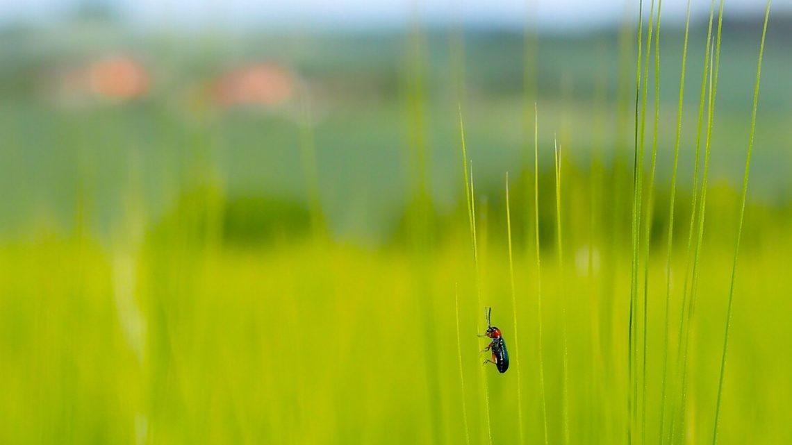 Sostenibilità ambientale: il ruolo della ricerca scientifica di frontiera per il risanamento ambientale
