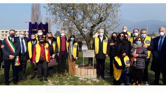 21 febbraio 2021 – COVID – Vo': piantato ulivo in memoria delle vittime